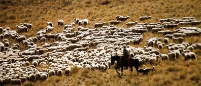 »Neuseeland auf Schritt und Tritt: 22-Tage-Erlebnisreise«