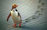 »Neuseelands artenreiche Tierwelt«