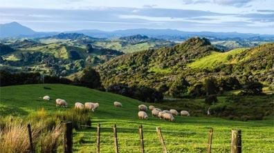 »Neuseelandreise: Grüne Hügellandschaft auf der Nordinsel«