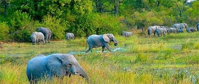 »Okavango Botswana: Vorfreude ist die schönste Freude«