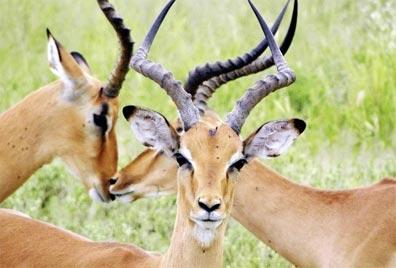 »Chobe Nationalpark - Okavango und Chobe Fly In-Safari«