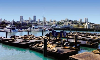 » Der Südwesten & New York: Pier 39 San Francisco «