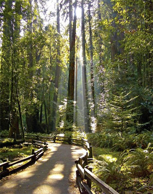 » Nordwesten entdecken: Redwood Nationalpark «