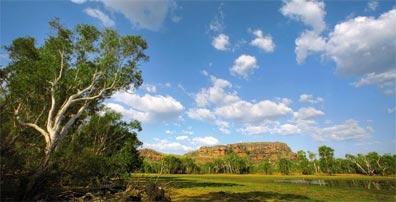 »Reise nach Australien: Wallabies im Kakadu-Nationalpark«