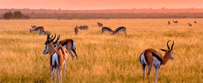 »Reise Moremi nach Botswana und Namibia«