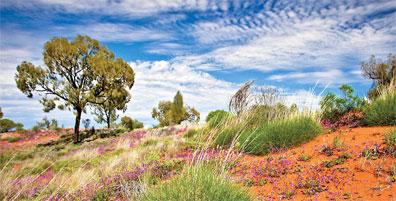 »Australien von seiner schönsten Seite: Rotes Zentrum«