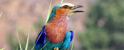 »14 Tage Botswana und Namibia Wunderwelten-Reise Moremi«