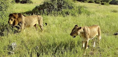 »Südafrika Busreisen und Safaris: Erkunden Sie Südafrika«