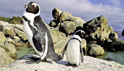 »Südafrika Rundreise - 14 Tage Entdeckungsreise«