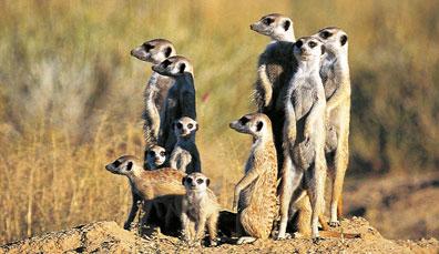 »Tolle Reisen nach Südafrika für Groß und Klein«