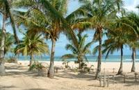»Tropische Strände und afrikanischer Busch«