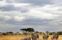 »Campingsafari Tanzania - Tanzania Camping Adventure«
