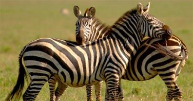 »Tanzania Camping Adventure: Pirschfahrten in der Serengeti«
