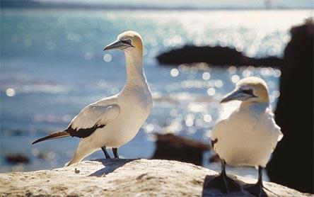 »Naturwunder Neuseelands: Vogelparadies Stewart Island«