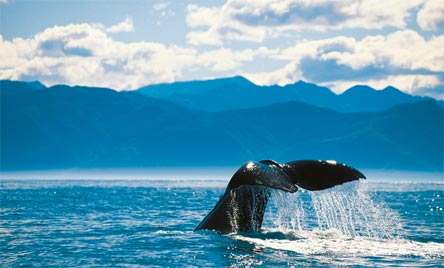 »Naturwunder Neuseelands: Walbeobachtung in Kaikoura«
