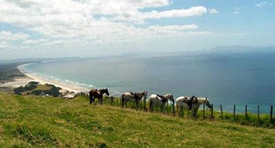 »Freuen Sie sich auf abwechslungsreiche Reittage Neuseeland«