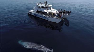 »Neuseelands artenreiche Tierwelt: Whale Watching«