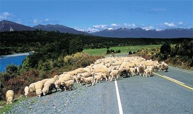 »Neuseeland Rundreise: Von Küste zu Küste im Campervan«