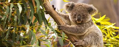 »Naturwunder Australiens - Gruppenreise Australien«