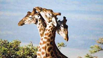 »Abenteuer in wilder Natur - Abenteuer Südafrika«
