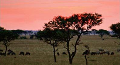 »Abenteuer Tansania - Rundreise Tierwelt Nationalpark«
