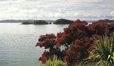 » Best of New Zealand Rundreise: Bay of Islands «