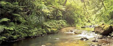 »Große Neuseeland Rundreise: Waipoua Wald«
