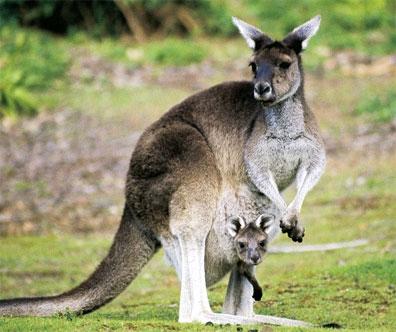 »Australiens Glanzpunkte kompakt - Rundreise Australien«