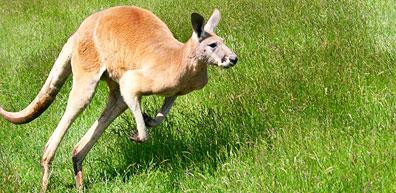 »Australien intensiv: Flora und Fauna im Kakadu Nationalpark«