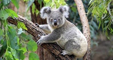»Rundreise Australien - Terra Australis«