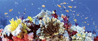 »Reise zum Great Barrier Reef - Australien zum Kennenlernen«