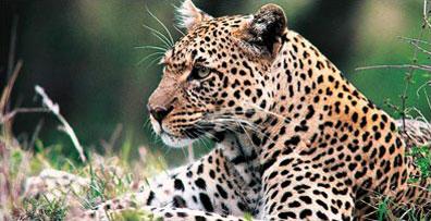 »Auf der Suche nach den Big Five - Kenia Rundreise und Safari«