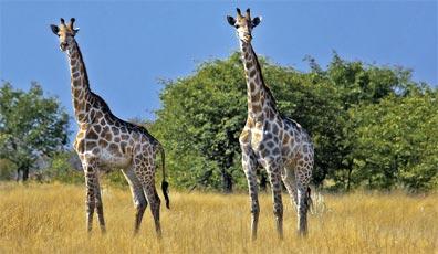»Mietwagenreise Namibia und Botswana«