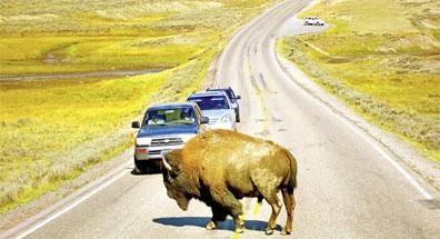 »Land der Abenteurer: Yellowstone Nationalpark«