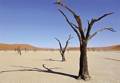 »Dead Vlei, Namibia - Von Kapstadt bis zu den Viktoria Fällen«