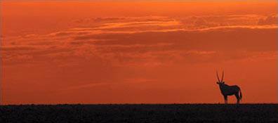 »Studienreis Namibia: Die Höhepunkte Namibias«