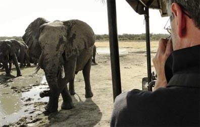 »Durch Königreiche nach Kapstadt: Auf Safari...«