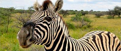 »Namib entspannt - Erlebnisreise Namibia«