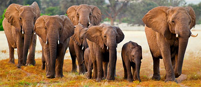 »Elefanten im Etosha-Nationalpark - Namibia Rundreise«