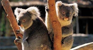 »Three Sisters, Blue Mountains - Australien Rundreise«