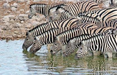 »Die Weite Namibias: Etosha Nationalpark«