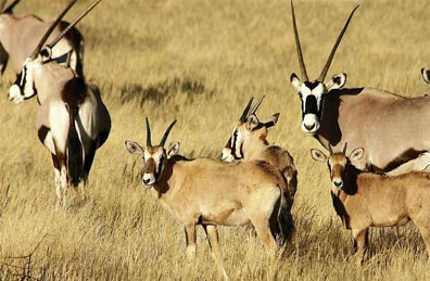»Etosha Nationalpark - Exklusive Fly In-Safari Namibia«