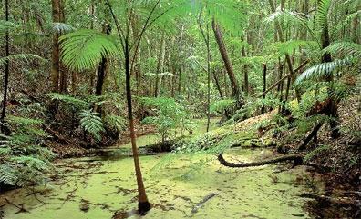 »Regenwald auf Fraser Island - Fraser Island Wildnis Safari«