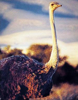»Südafrika Gartenroute und Karoo Rundreise«