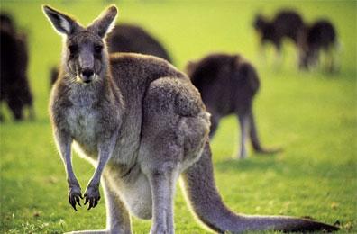 »Australien erkunden: 4-wöchige Rundreise Australien«