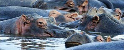 »Hippo Erlebnisreise Botswana und Namibia«