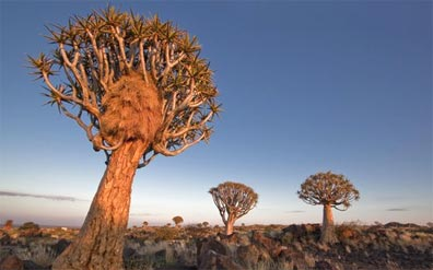 »Rundreise Namibia - Lodgesafari Höhepunkte Namibias«