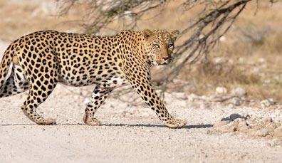 »Höhepunkte Namibia - Rundreise Namibia Lodgesafari«
