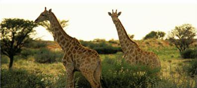 »Die Höhepunkte Namibias: 15-Tage-Studienreise«