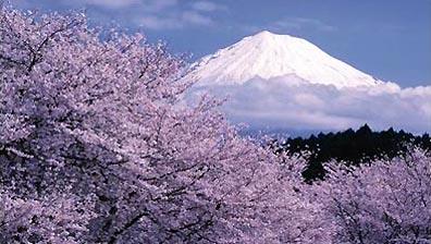 »Kirschblüte am Fuß des Fuji - preisgünstige Japanreise«